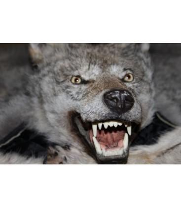 2406 Шкура волка